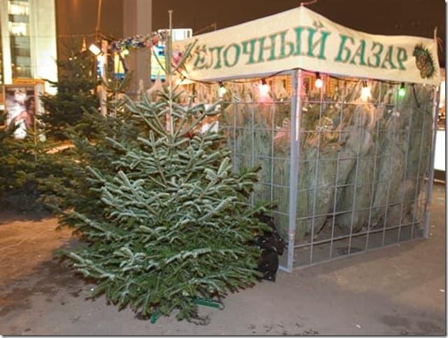 Оптовая продажа елок на новый год