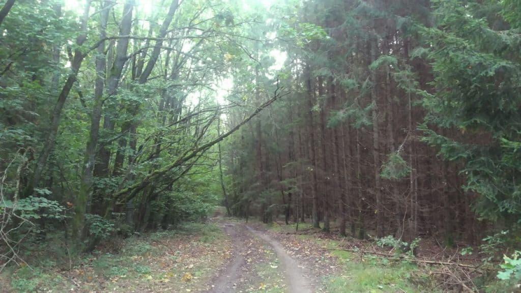 В Свислочском районе до сих пор ищут подростка, который потерялся в лесу