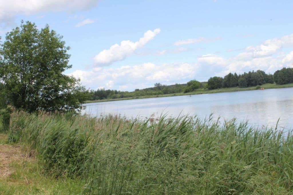 Лидское озеро зарастает ядовитой травой?