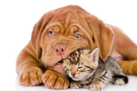 До двух котов: власти хотят изменить правила содержания домашних животных