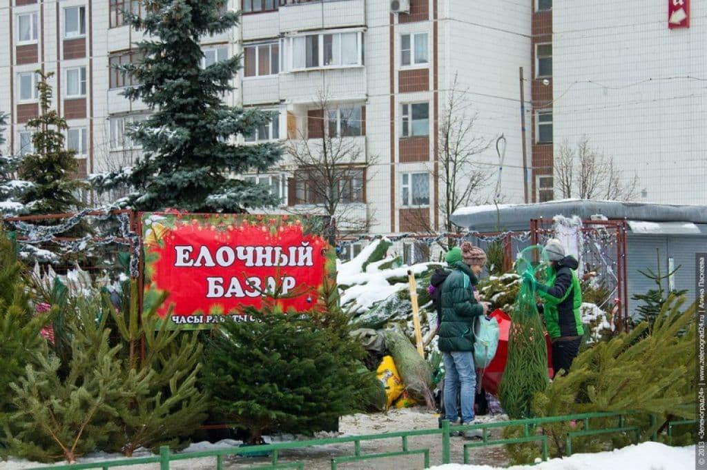 Елочные базары на Лидчине начнут работать с 19 декабря