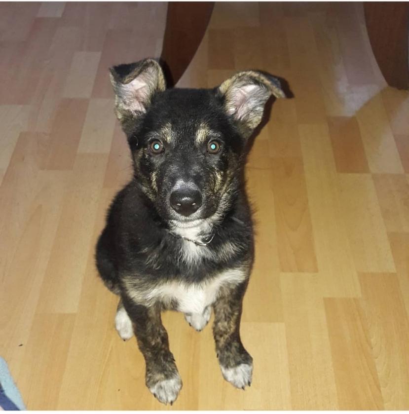«Моя собака – что хочу, то и делаю»? Лидчанин получил крупный штраф за жестокое обращение с животным