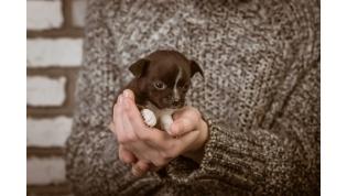Хотели сделать сюрприз маме?В Лиде девочки-подростки взяли щенков «в добрые руки». Спустя неделю животных нашли на стадионе!.. К счастью, живыми...