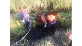 Вытянули из болота. Под Лидой работники МЧС спасли лошадь